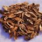 批发优质灌木种子 暴马丁香种子 紫丁香种子 当年采摘量大优惠
