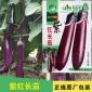 紫红长茄 三月茄 四季播茄子种子 菜园盆栽庭院大棚有机蔬菜种子